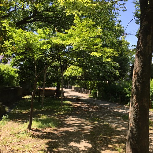緑深い散歩道