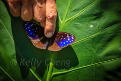 Taiwan-121113-227 (Kelly Cheng) Tags: travel color colour green tourism nature animals horizontal fauna butterfly daylight colorful asia day taiwan vivid colourful traveldestinations  northeastasia