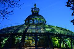 Winter garden (larry_antwerp) Tags: brussels belgium belgi wintergarden brussel  wintertuin laken royalgarden         koninklijkeserre