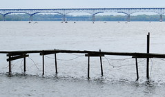 Susquehanna River, Maryland (lotos_leo) Tags: statepark bridge water river landscape fishing md outdoor maryland chesapeakebay i95 susquehannariver  susquehannastatepark  millardetydingsmemorialbridge  tydingsbridge csxsusquehannariverbridge   eastcoast2016