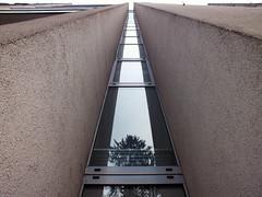 Tree reflection (Lukinator) Tags: windows reflection building tree window wall architecture fenster spiegel perspective finepix architektur fujifilm fenstern straight simple reflexion spiegelung baum gebude perspektive linear mauer gerade hs20 simpel geradlinig geradeaus