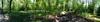 Bluebell Panorama (Heaven`s Gate (John)) Tags: wood blue trees england sunlight nature wet bluebells walking landscape botanical spring birmingham woods shadows walk may bluebell solihull earlswood johndalkin heavensgatejohn