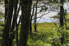Pinse 2016 (dese) Tags: norway fjord scandinavia tre hordaland fjære vestlandet pfingsten noreg pentecost fusa 2016 whitsun pentecôte vinnes whitesunday pinse bjørnefjorden pentecostés 2016 may15