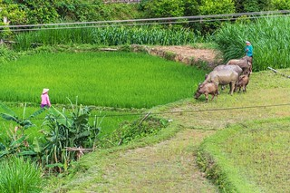 bac son - vietnam 9