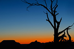 Nakedness (dbushue) Tags: morning arizona tree nature sunrise landscape scenery colorful branches grandcanyon silhouettes canyon gnarly nakedness matherpoint 2011 coth supershot naturesgarden absolutelystunningscapes damniwishidtakenthat coth5 dailynaturetnc11