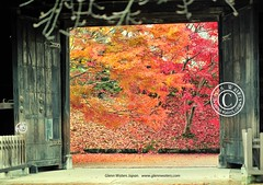 The Gates that lead to Autumn. (Hirosaki Japan).  Glenn Waters.    7,000 visits to this photo. Thank you. (Glenn Waters in Japan.) Tags: autumn castle japan nikon getty    d700 nikond700  glennwaters
