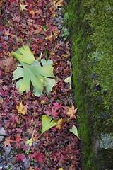 Taji Shirine (*akky*) Tags: kyoto shrine hiyoshi