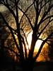 catch the light (koaxial) Tags: autumn sunset tree fall canon evening abend sonnenuntergang herbst bald powershot twigs baum zweige kahl sx130 0276 koaxial canonpowershotsx130is img0222a flickrstruereflection1