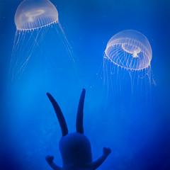 Plankton Goes Jellyfishing! (pixelmama) Tags: california blue aquarium monterey jellyfish tank spongebobsquarepants moonjellies montereyaquarium plankton moonjellyfish thetourist pixelmama toyintheframethursday htitft 16daycaliforniasafari sheldonjplanktonjr
