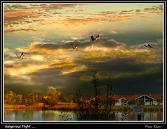 dangerous flight .... (Explore) (Peter Roder) Tags: trees sun lake storm reflection nature water birds clouds farmhouse see sonnenuntergang sundown wolken cranes thunderstorm sonne gewitter kraniche reflektion unwetter