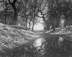 The Secret Dance of Trees(Winter) (kenny barker) Tags: trees bw mist tree nature monochrome landscape lumix scotland reflaction alberoefoglia panasonicg1 fleursetpaysages kennybarker