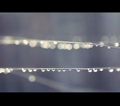 Water drops (TheMalni Photography) Tags: winter water drops bokeh tamron9028 canon450d themalni dinablaszczak