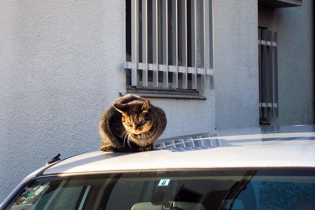 Today's Cat@2011-12-10