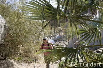 Palm Canyon Nature Trail