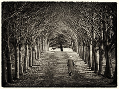 You'll Never Walk Alone (Feldore) Tags: life old trees ireland woman castle forest walking death alone sad walk elderly journey age end stick ward avenue northern mchugh isolated strangford poignant feldore