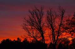 Buford, Georgia Sunset (esywlkr) Tags: trees sunset silhouette clouds ga georgia sunsets sunrises storms buford gwinnettcounty bufordga