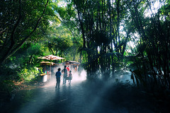 Tropical [Explored] (Fang Tong) Tags: trees light people green nature nikon tong fang tropica