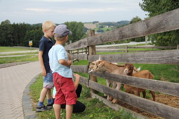 Kinder füttern Ziegen