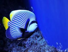 Bluest Blue (Serlunar (tks for 6.2 million views)) Tags: blue flickr do fotos bluest premiadas flickrduel serlunar