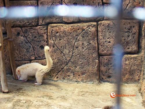 Batu Secret Zoo - Batu - East Java