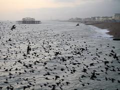 Palace Pier starlings (musical photo man) Tags: brighton starlings brightonpier palacepier