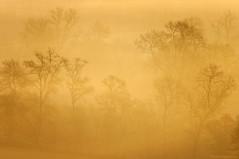 Un air de fort vierge ... (Pierre-Paul Feyte) Tags: mist tree fog arbre brouillard brume gascony gascogne gers chne brumesdegascogne