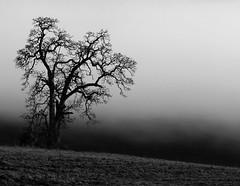 Before the fog (K D Photos) Tags: bw mist canada tree nature monochrome weather fog landscape day bc farm vancouverisland sidney regionwide mygearandme mygearandmepremium mygearandmebronze mygearandmesilver