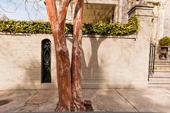 Charleston-_TSC3347 (T. Scott Carlisle) Tags: charleston tsc architecturedetails tscottcarlisle tscottcarlislecom