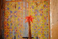 orange, orange. (SalmaZag') Tags: blue morocco rabat oudayas
