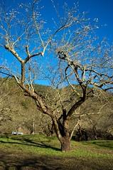 2012 Jan  X100 21 (Austin's Footprints) Tags: taiwan fujifilm digitalcamera plumblossoms nantou  taiwanimage beautifultaiwan finepixx100