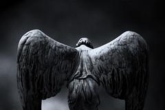 Dark Angel (NRG Photos) Tags: blackandwhite friedhof cemetery grave angel dark wings engel grab darmstadt dunkel rosenhöhe flügel schwarzweis princesselisabethofhesseandbyrhine prinzessinelisabethvonhessenundbeirhein
