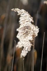 a winter day (Wackelaugen) Tags: light nature backlight canon photography eos photo gras 500d renningen