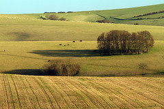 Farmland (Susan SRS) Tags: morning england canon outdoors sussex countryside 70200 eastsussex southdowns ditchling southernengland img0976 eos7d bestcapturesaoi