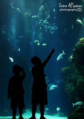 aquarume (Zaina Al-Sanea) Tags: fish look kids zaina alsane alsanea aquarume
