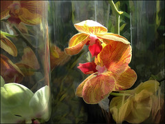 more flowers (Sunnyvaledave) Tags: painting experimental