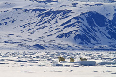 "Eisbären,  Baffin Bay, Kanada • <a style=""font-size:0.8em;"" href=""http://www.flickr.com/photos/73418017@N07/6730325833/"" target=""_blank"">View on Flickr</a>"