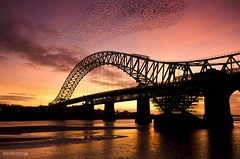 Runcorn/Widnes Bridge (Starling Murmuration) (dave-baker) Tags: bridge david nikon baker sunday runcorn sliders widnes hss d7000