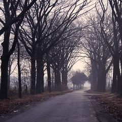 Road (Dedication-Photography) Tags: life urban nature dutch landscape nikon europe exposure live d40 nikond40
