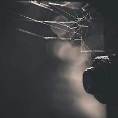 A Place To Call Home (mynamesdonny) Tags: monochrome dark spider bokeh geometry web olympus bolt nut odc aplacetocallhome epl1 ourdailychallenge odc3