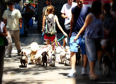 Hunters (Happy Women's day) / Cazadores (Feliz Día de la Mujer) (Claudio.Ar) Tags: street city color dogs topf25 argentina calle mujer buenosaires women sony ciudad perros dsc h9 blueribbonwinner claudioar claudiomufarrege rememberthatmomentlevel1