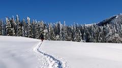 ösvény a hóban / path in the snow (debreczeniemoke) Tags: winter snow landscape hiking tájkép hó tél túra pathinthesnow canonpowershotsx20is gutinhegység munţiigutâi ökörmező munţiigutin ösvényahóban