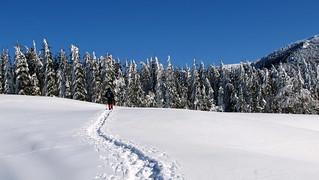 ösvény a hóban / path in the snow