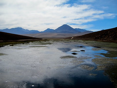 River oasis (kimbar/Thanks for 2.5 million views!) Tags: chile reflection river oasis altiplano