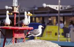Mine, Mine, Mine, Seagull (dualdflipflop) Tags: seagulls film birds 35mm nikon mine fuji scanner superia disneyland f100 disney scan nikonf100 300mm epson fujifilm v600 expired tamron submarines reala 300mmf28 fujicolor 100iso submarineride 60b fujicolorsuperiareala100 tamronadaptall2sp300mmf28 epsonv600 findingmemo