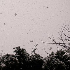 :: listening falling the snow (J!bz) Tags: snowflake winter light sky bw naturaleza white snow black france cold tree fall blanco luz nature monochrome weather arbol photo noir natural hiver nieve negro flake natura nb falling ciel lumiere snowing neige arvore temps arbre blanc fresco froid frio auvergne naturelle flocon jbz cantal flocondeneige hiverno jibz