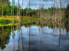 Swamp Reflections (Dean Martin (simplyred4x4)) Tags: trees summer camp lake reflection tree nature water colors reflections river mirror shine swamp marsh hdr highdynamicrange exposures simplyred simplyred4x4