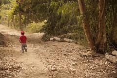 Mi Chiquito correlon - 9505 (Marcos GP) Tags: baby peru field camino perspective run future campo bb niño destino progreso ica avance futuro corriendo corre chacra arboleda runer marcosgp