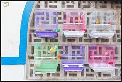 Colors of Confinement (Jogesh S) Tags: bird birdcage colors canon freedom cell captivity 6d birdsincages canonef1635mmf28liiusm canonef1635f28lii birdsandanimalmarket