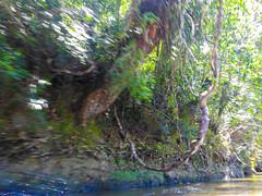 DSCN0682 (vhenryz) Tags: park trip trees sky cloud motion nature water clouds speed forest river vines reserve national mangrove jungle splash brunei ulu temburong