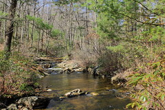 Gifford Run I (DavetheHiker) Tags: trees nature water creek forest outdoors stream hiking pennsylvania pa trail stateforest pennsylvaniawilds clearfieldcounty pawilds moshannonstateforest pennsylvaniastateforest giffordrun quehannahikingtrail